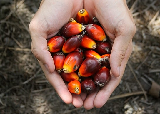 Palm Oil part 1